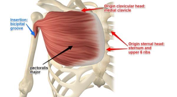 exercise for inner chest