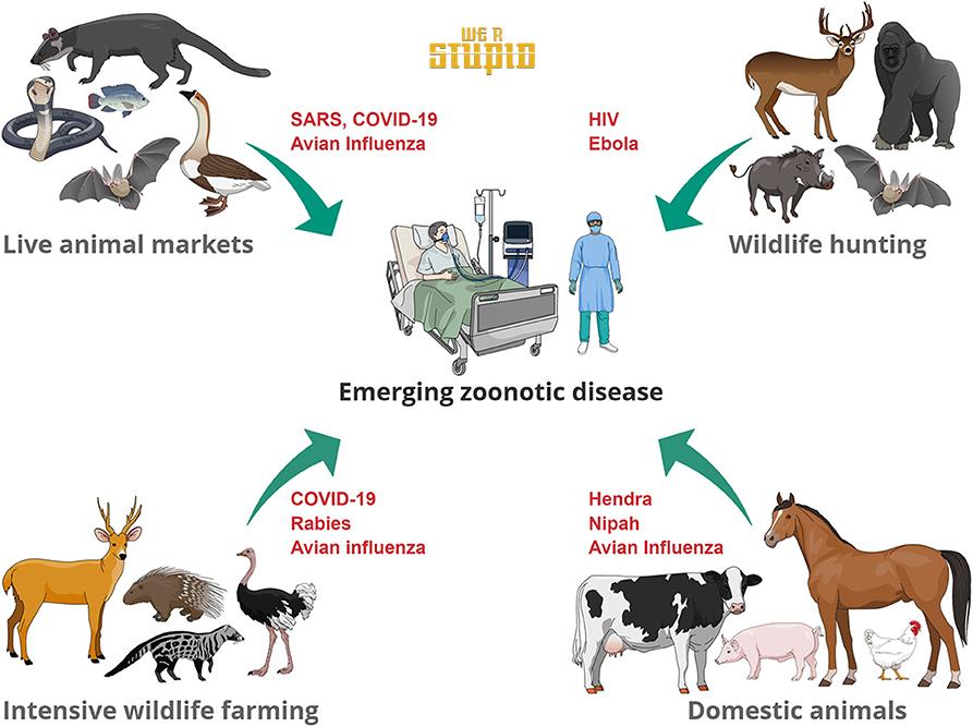 zoonotic influenza